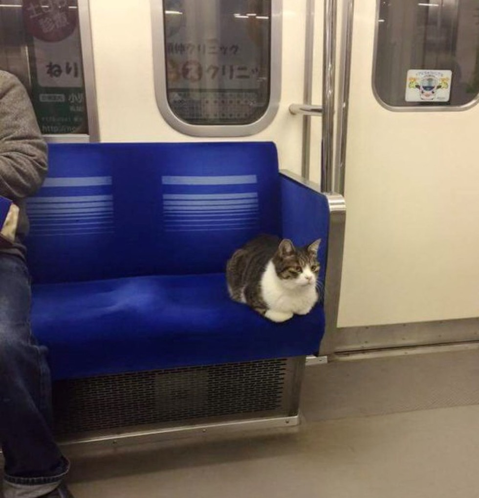 catloaf-taking-train-alone.jpg
