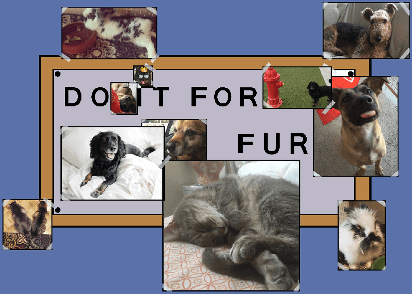 The ATP Team's pets - do it for fur
