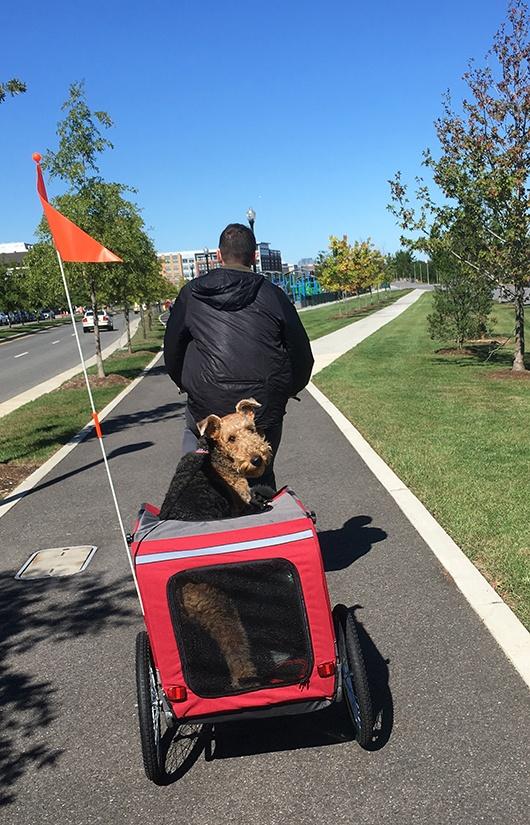 finley-in-dog-trailer-bike.jpg