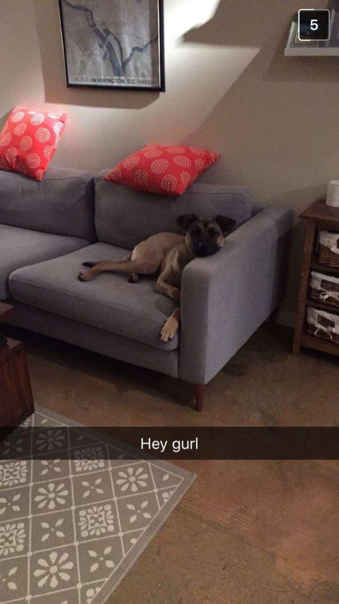 Rilo, dog,