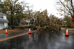 Tree down on street