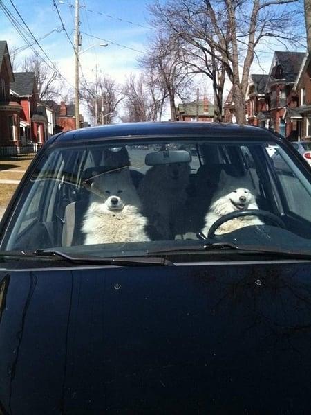Carpool - why it's great