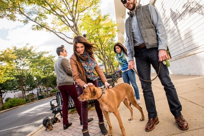 pedestrians-dogs-bc-ah.jpg